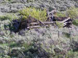 Ruins of Horse Thief cabin, Highway 40 Sheep Creek Utah